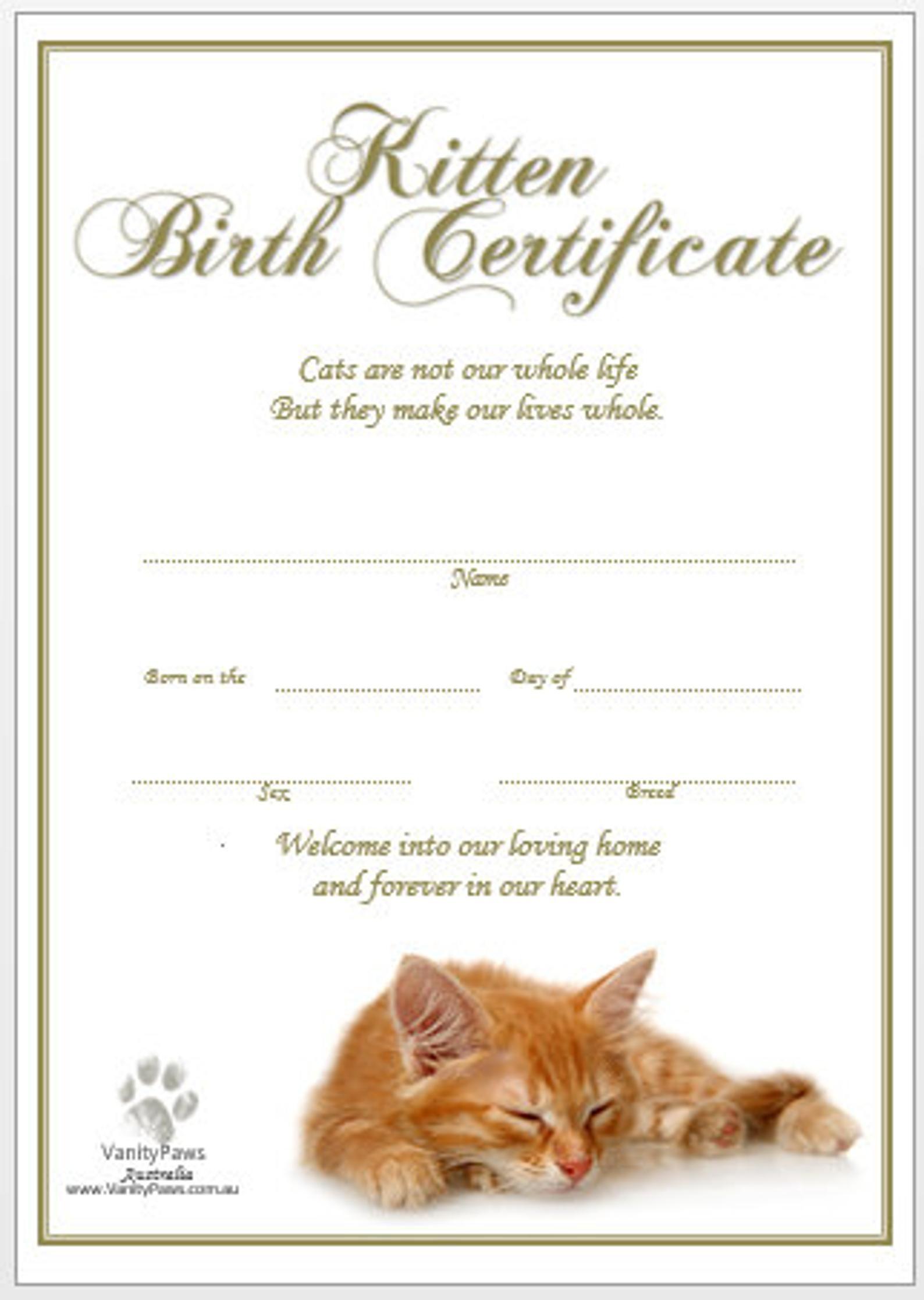 Kitten Birth Certificate Ginger Instant Download Birth Certificate Template Cat Birth Birth Certificate