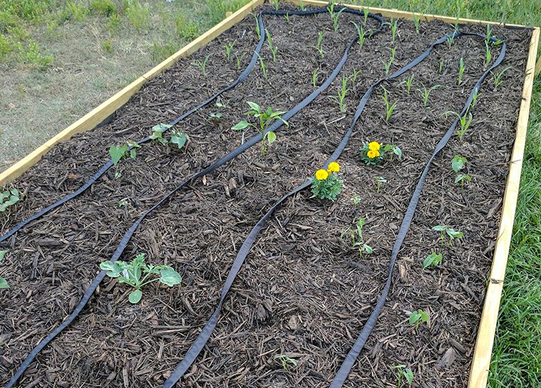 Florida Vegetable Gardening For Beginners Gardening For