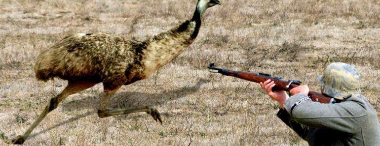 حرب الإيمو من أغرب الحروب على مدار التاريخ ماذا تعرف عنها Emu War Emu War