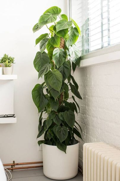 10 Cool House Plants To Grow Inside British Gq