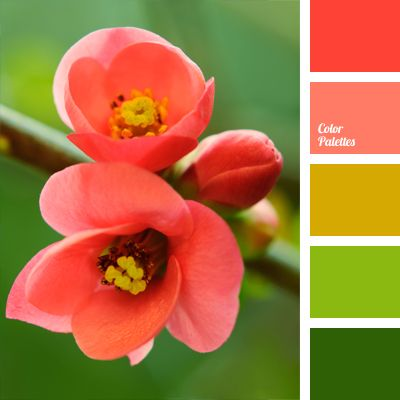 combination of natural hues: coral red, apple, grass green and