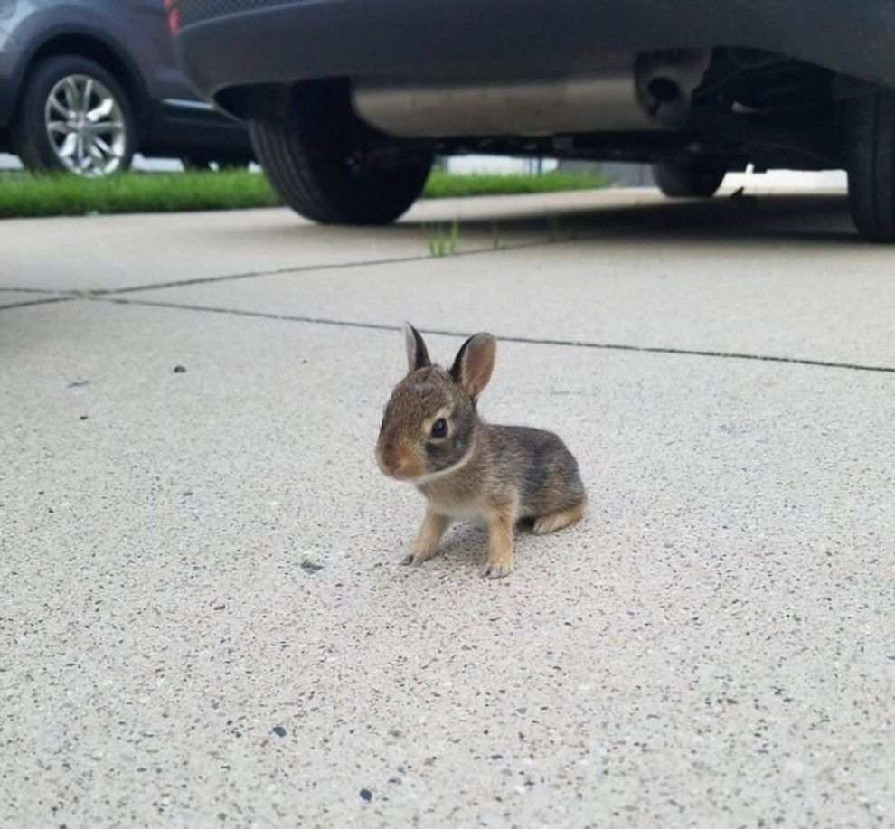This unbelievably small bunny. | Animals, Cute animals, Animal categories