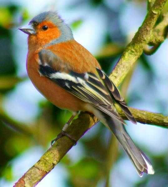 Pin Von Erme Auf Oiseaux Vogel Heimische Vogel Tiere