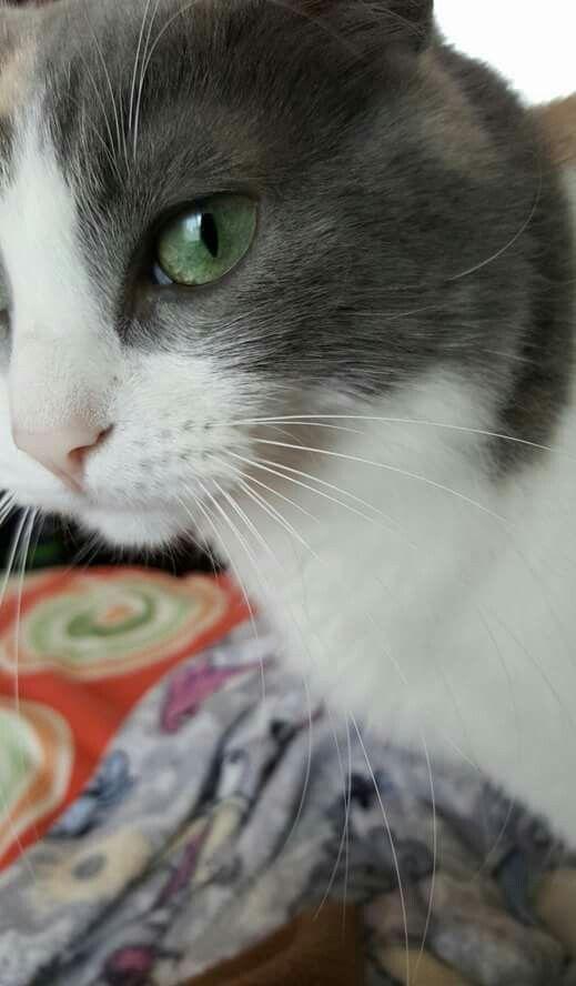 Me encantan sus ojos♡♡