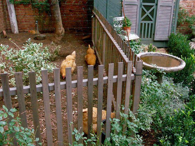Homestead Revival: Urban Chicks
