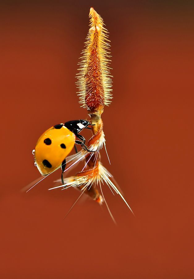Ladybug Photo #55