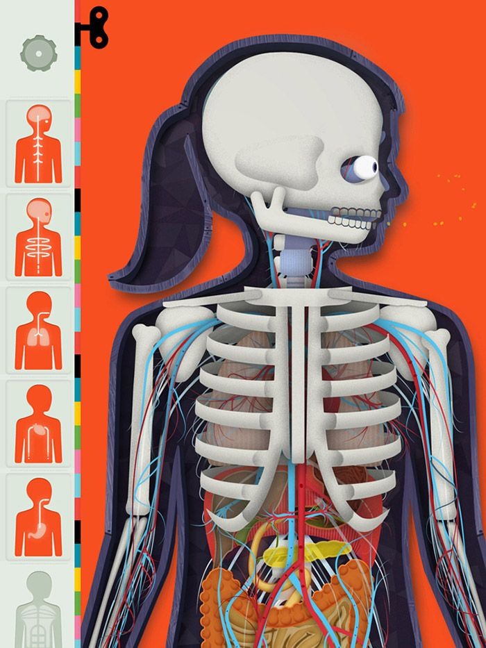 The Human Body App by Tinybop | multimedia | Pinterest