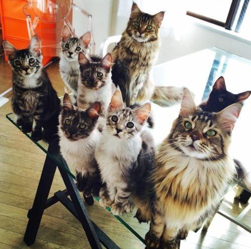 """The Cult Cat sur Twitter : """" http://t.co/P8Tbpsfc3q"""""""