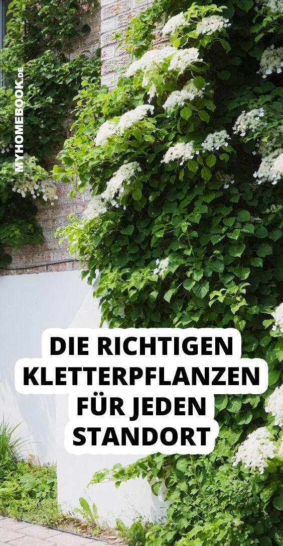 Die richtigen Kletterpflanzen für jeden Standort - myHOMEBOOK #kletterpflanzenwinterhart