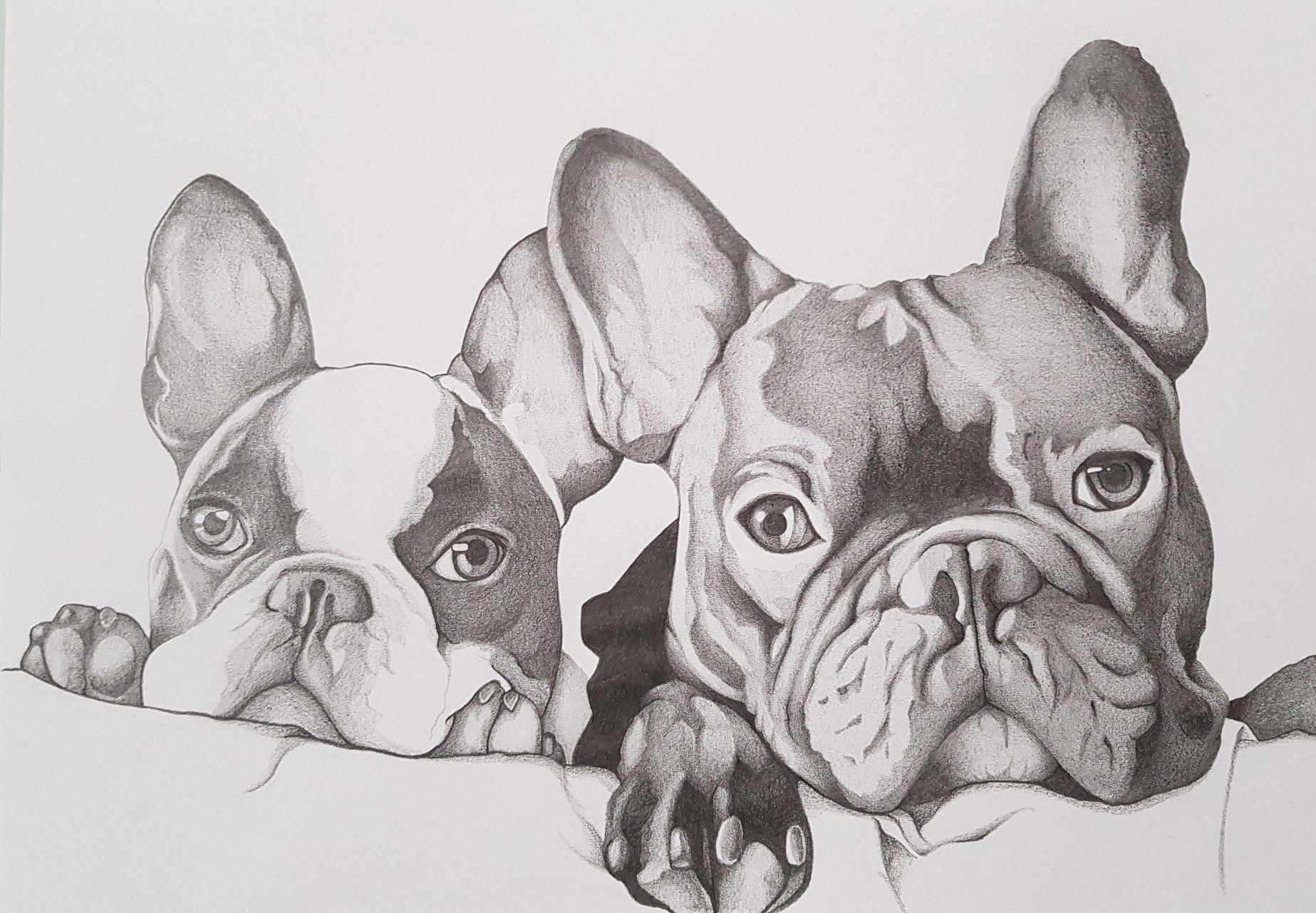 French Bulldogs Frenchbulldogszeichnung Honden