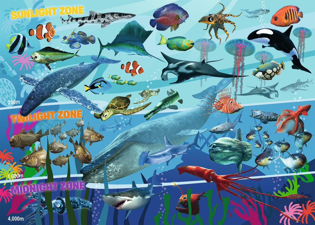Image result for sea animals of the Sunlight zone | first grade ...