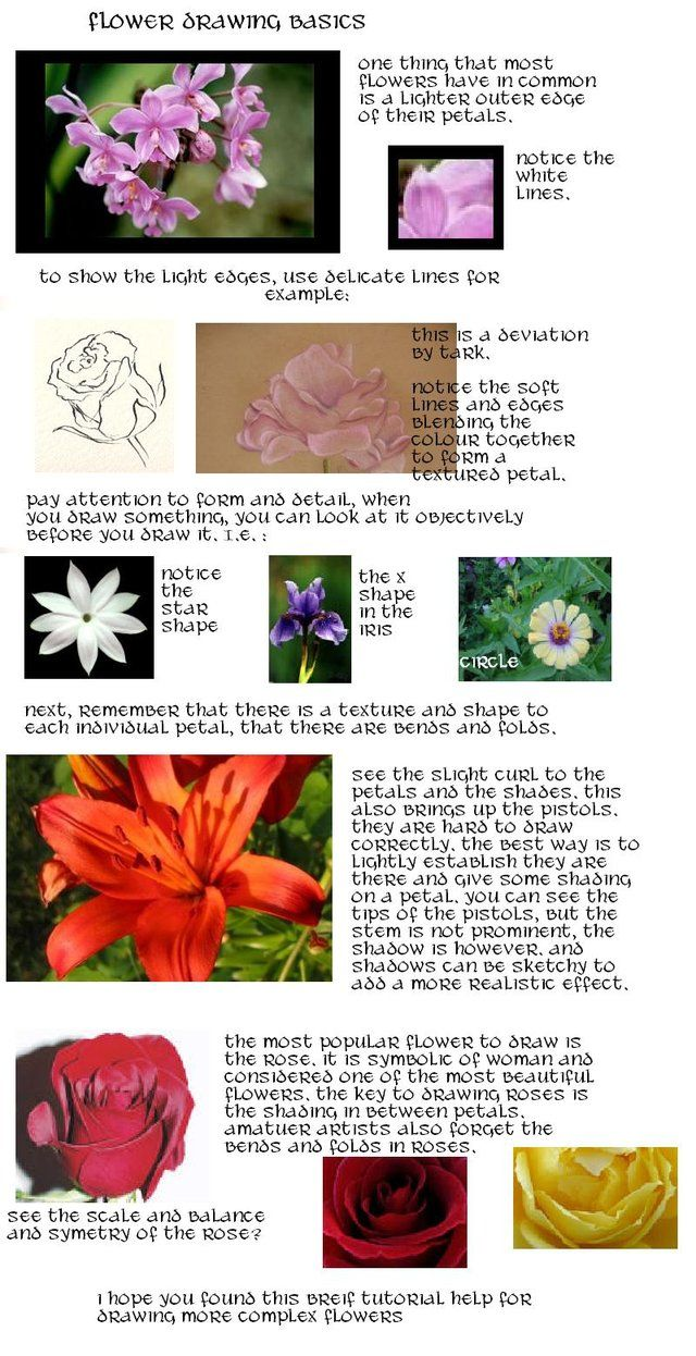 Flower drawing tutorial by stupidhippy on deviantart tutorial
