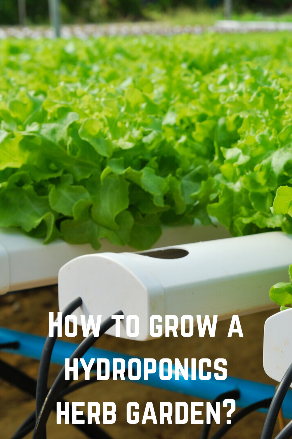 How to Grow a Hydroponics Herb Garden? in 2020 ...
