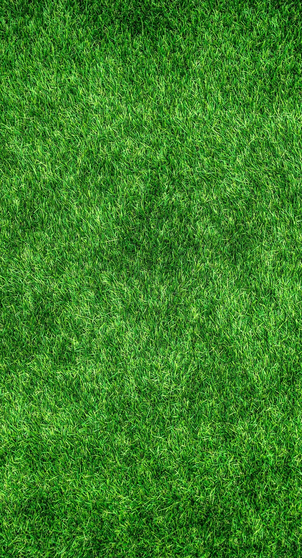 nature_green_abstract_plants_herb_grass_artificial_turf_gregarious-495269.jpg!d (1200×2216)