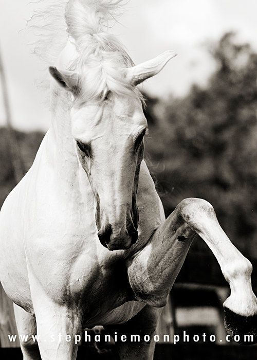 Horse photography black and white horse par stephaniemoon sur etsy 25 00