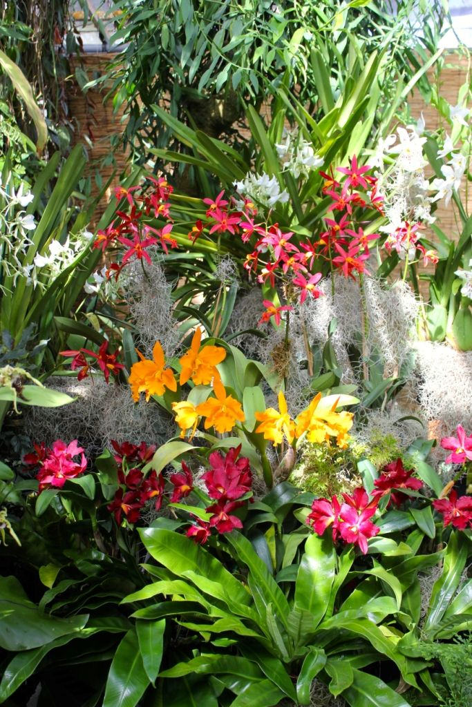 Marie Selby Botanical Gardens has a National Collection of Orchids ...