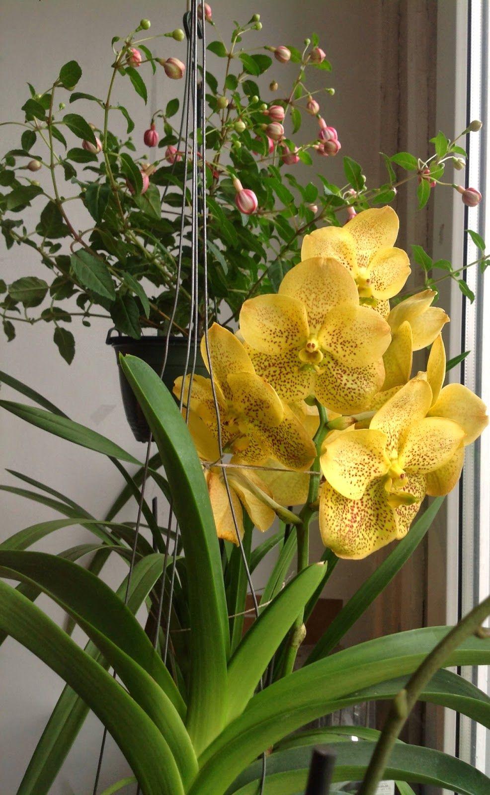 Sekretne Zycie Roslin Elementarz Storczykarza Podlewanie Czesc I Orchids Plants Garden
