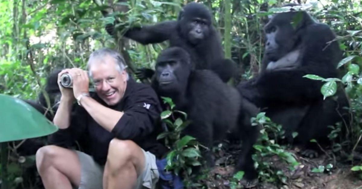 Él Estaba Fotografiando A Una Familia De Gorilas, Cuando El Más Pequeño Decidió Hacer Esto