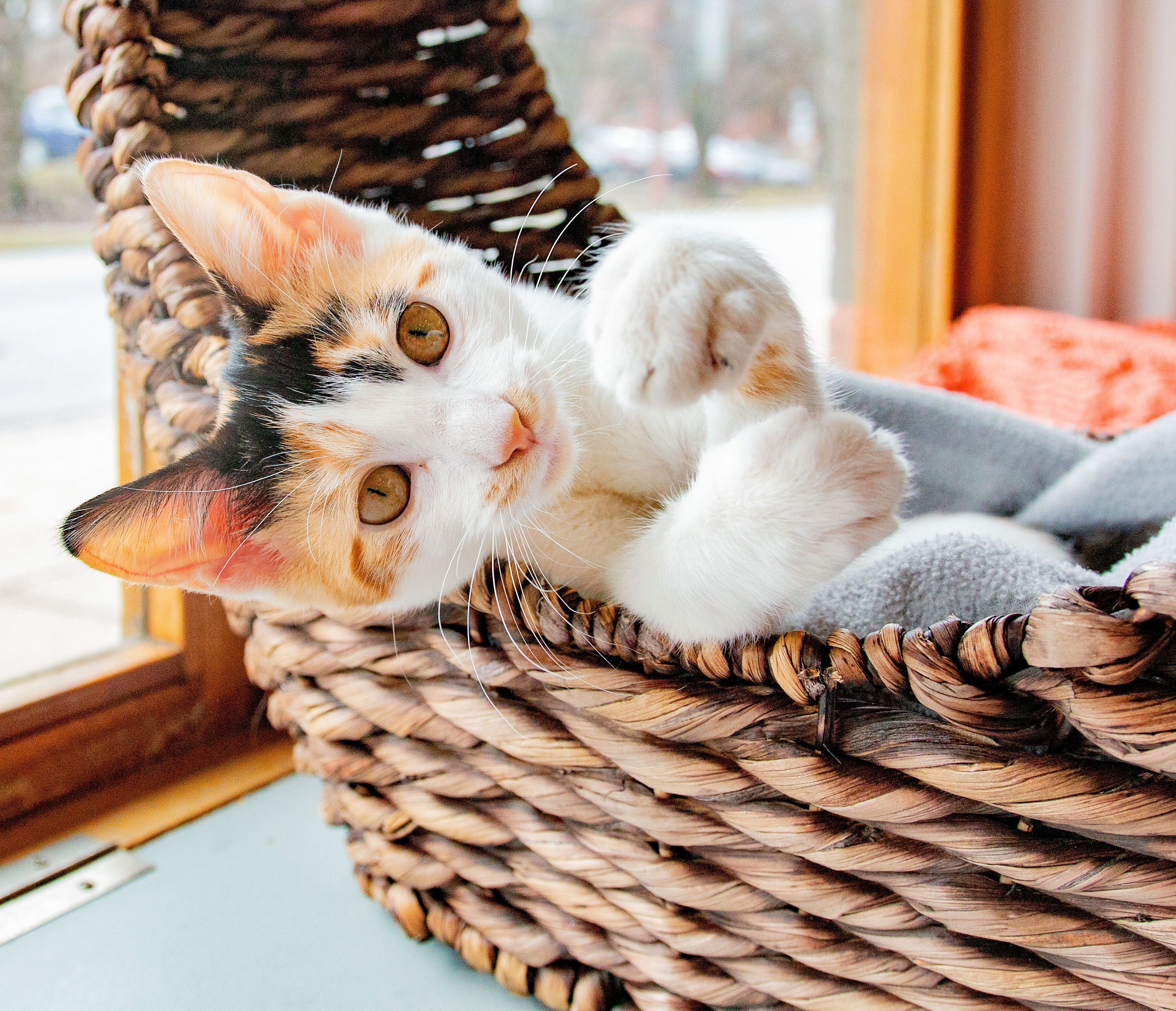 Visiting A Cat Cafe In 2020 Kittens Cutest Purrfect Cat Adoption