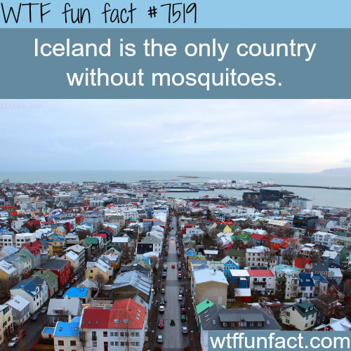 world without mosquitoes World without mosquitoes mosquitoes are known to have been on earth for more than a hundred years and in that long period of covering with different species they cease to be recognized as pests and disease spreading organisms that kills nearly one million people each year.