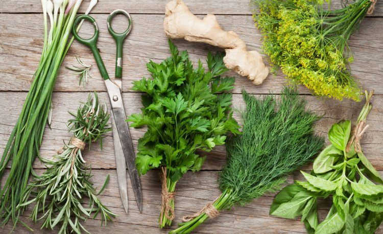 5 Essential Herbs You Should Have In Your Garden
