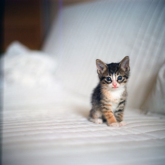 Sweet little kitten - meow by asya baranova, via Flickr