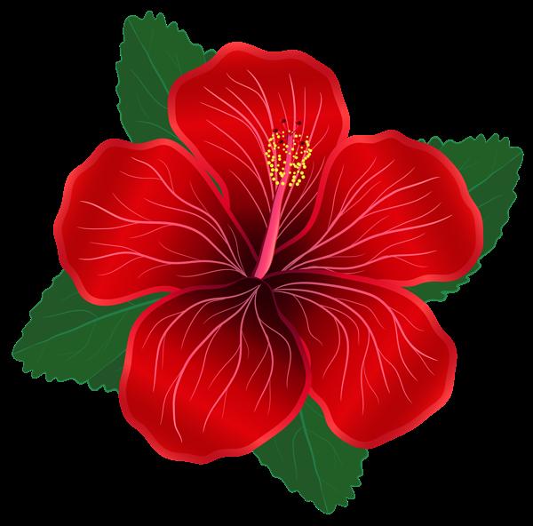 Red Flower PNG Clipart Image Clipart de flor, Flores