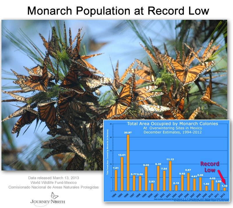 Monarch Butterfly Migration Journey North Citizen Science Project