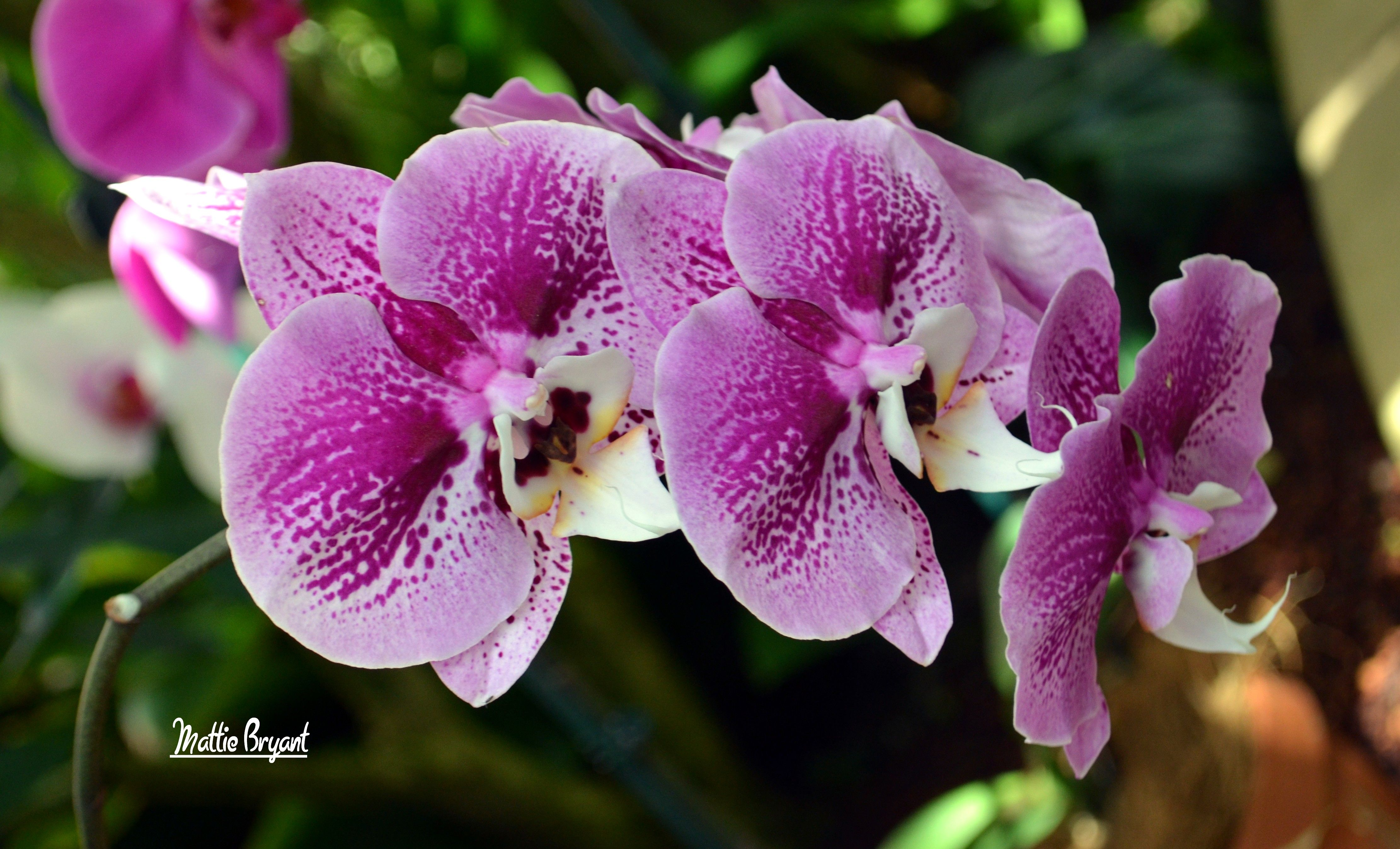 amazing blooms - Google Search