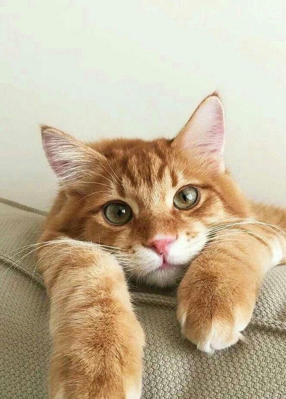 Pin By Jade Blackford On Cute Cats Beautiful Cats