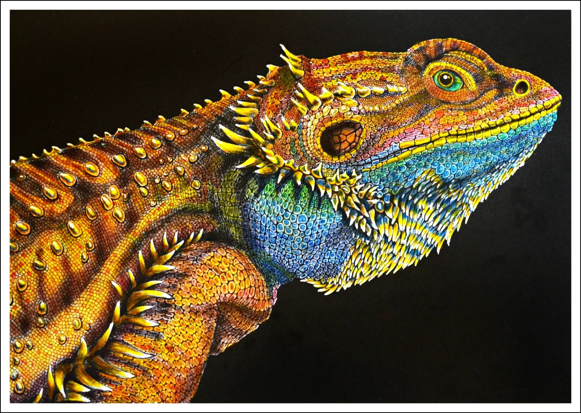 Bearded Dragon by Trevor Grant | Coloring Inspiration | Pinterest