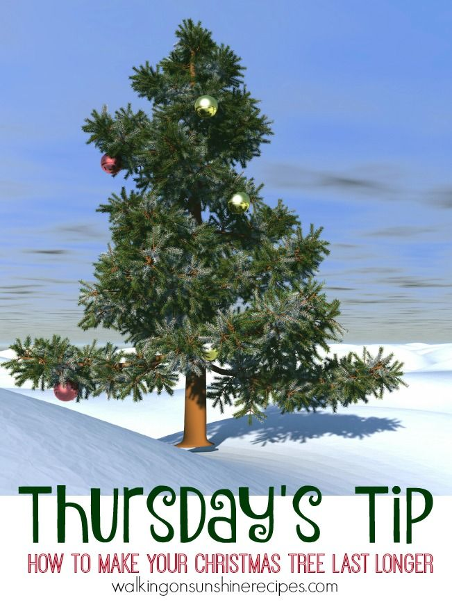 How To Make Your Christmas Tree Last Longer   Thursdayu0027s Tip From Walking  On Sunshine Recipes