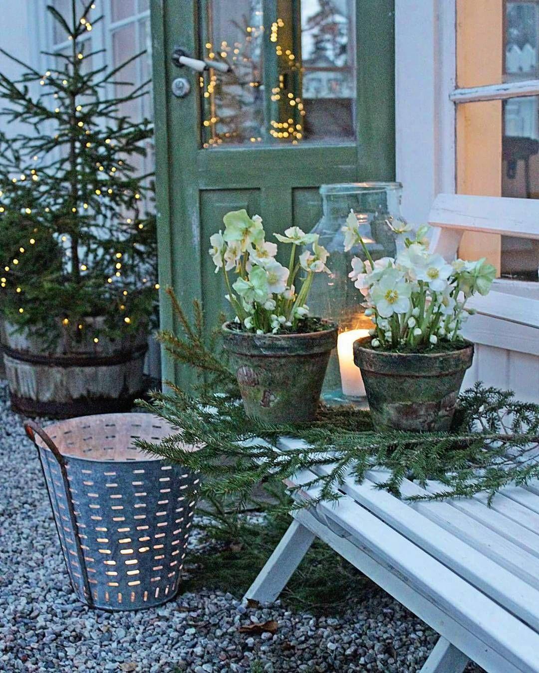 """Vibeke Sæther Svenningsen on Instagram: """"Vakker desember kveld der ute... Og julerosene i rustikke potter er fra @brynsblomster og zinkkurven og glasskrukke fra…"""""""