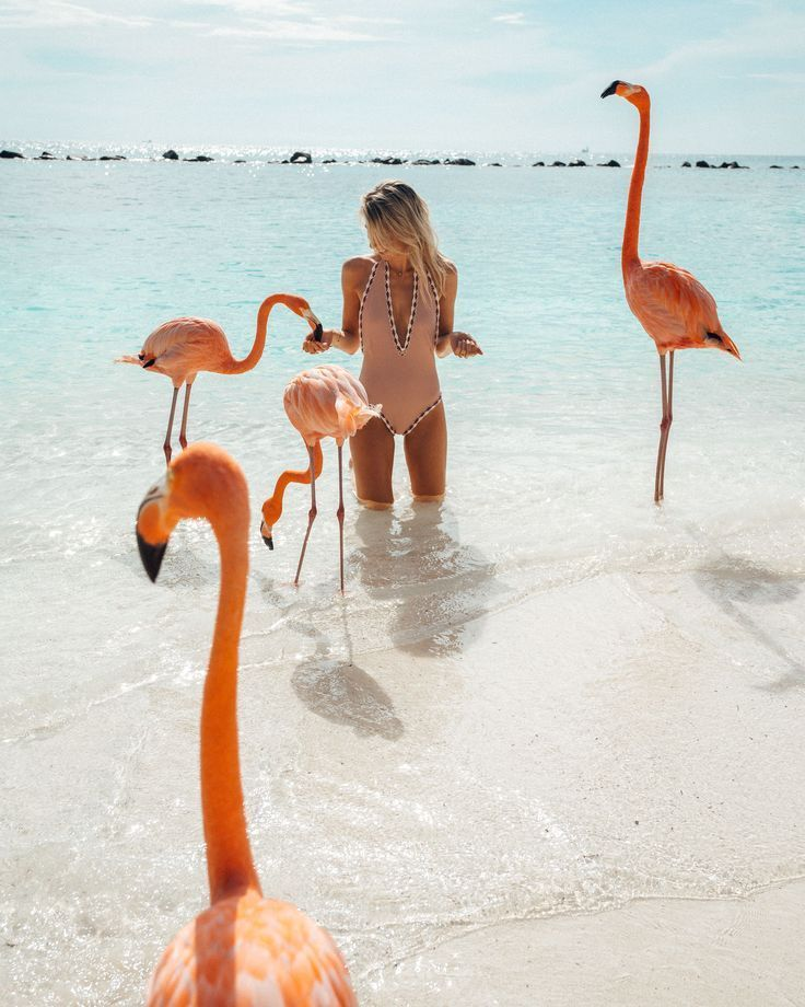 Feeding the flamingos in Aruba via Find Us Lost | Traveling to Aruba? The Complete Aruba Travel Guide features the best things to do on the island, including where to feed the flamingos, a list of the best beaches, restaurants, and more for your Aruba vacation. Click through for the full guide! #aruba #travelguide #beaches #flamingo #finduslost