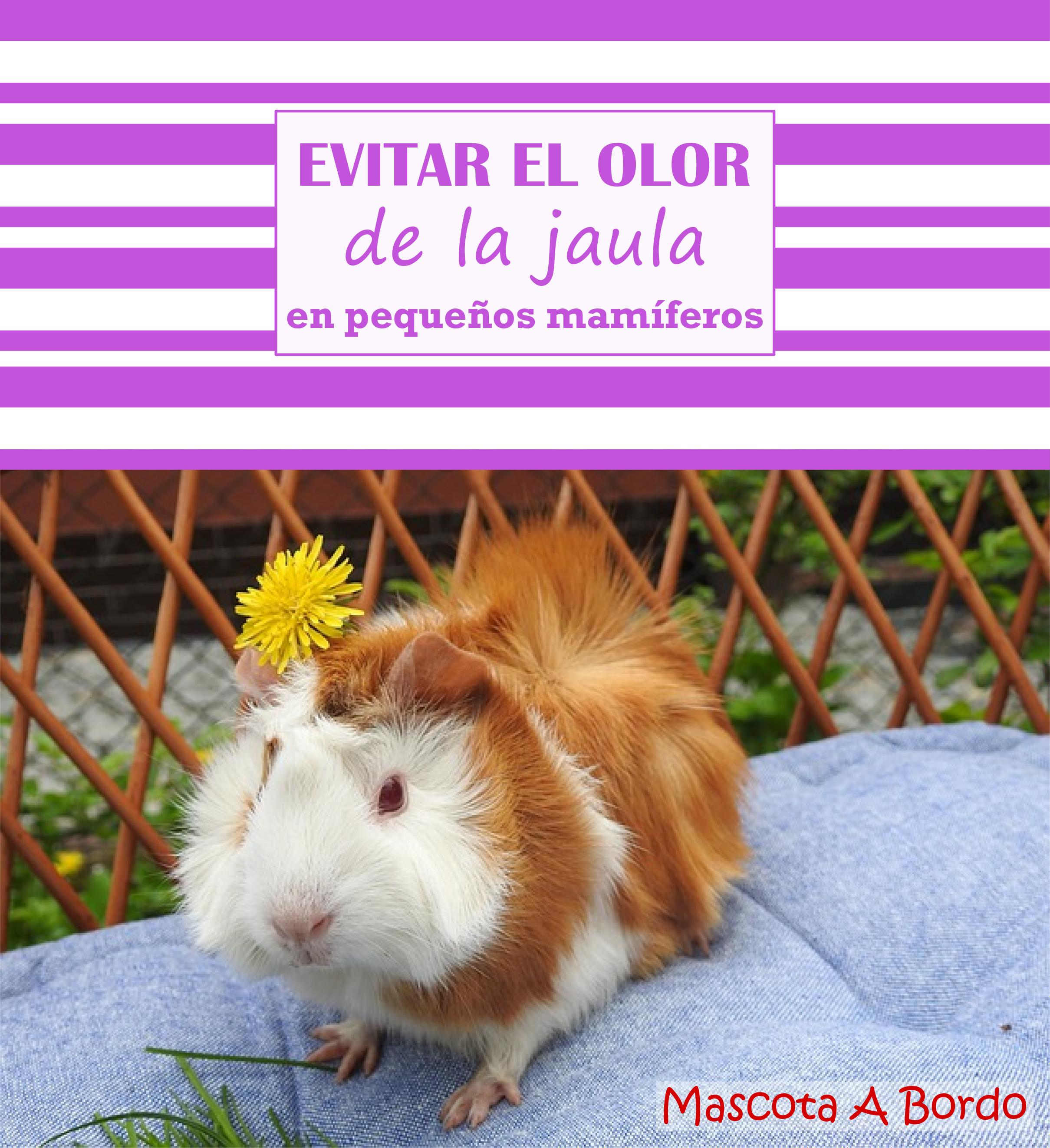 Evitar El Olor De La Jaula De Los Pequeños Mamíferos Jaulas Para Cobayos Cobayas Mascota Jaulas Para Hamster