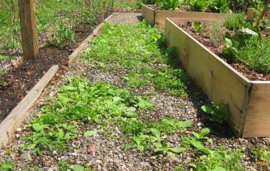 Use Vinegar To Kill Weeds In The Garden Gardening Pinterest Vinegar Gardens And Garden