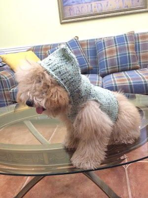 Hooded Dog Wrap | PET SHOP CROCHET FÇ VENDA | Pinterest
