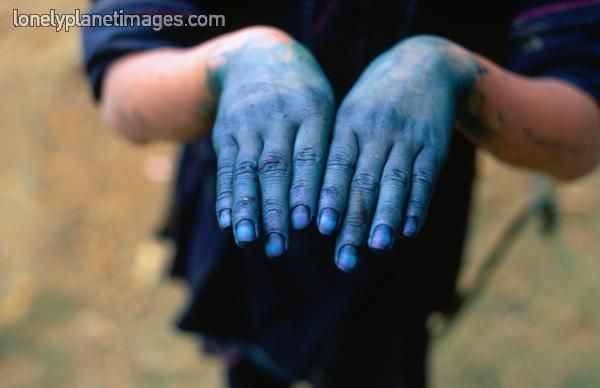 Related Keywords & Suggestions for indigo plant and dye