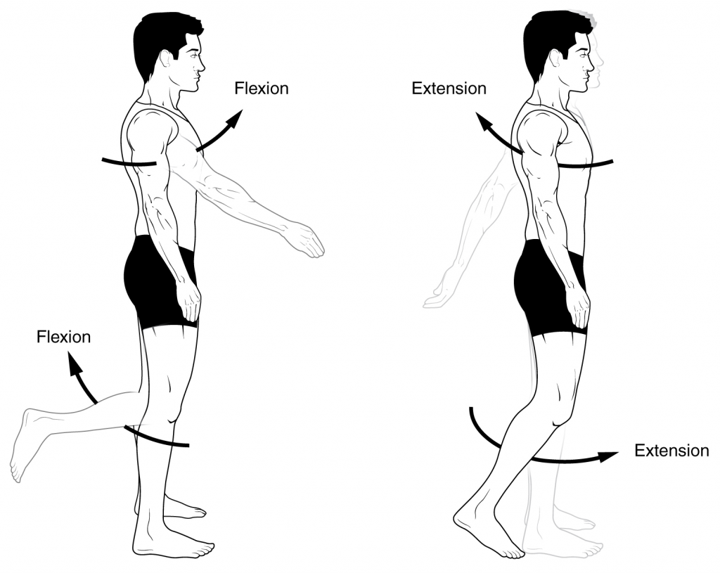 Pin By Tyakiso K On Anatomic Terms