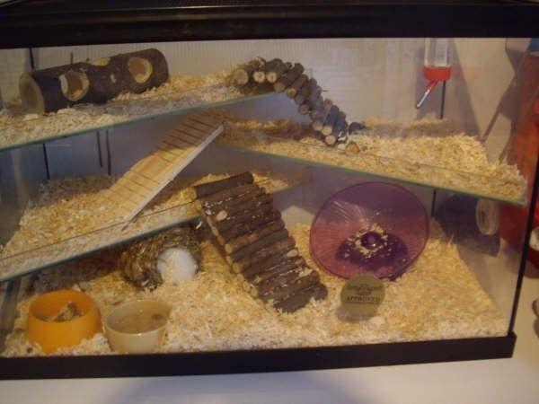 Inilah Kandang Ideal Untuk Hamster Hamster Hamsters As Pets