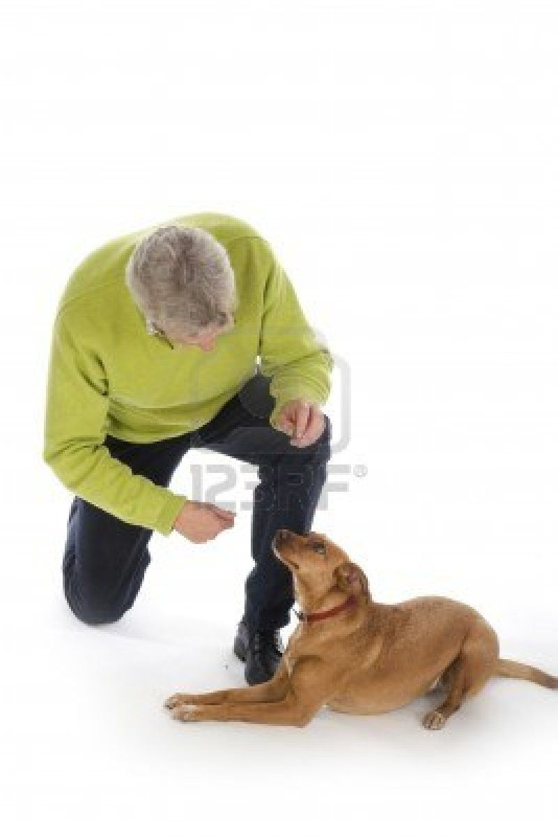 Imagine You Come Home From A Busy Day And Your Dog Greets You At The Door Or In The Backyard Without Literally Dog Training Dog Training Classes Dog Obedience