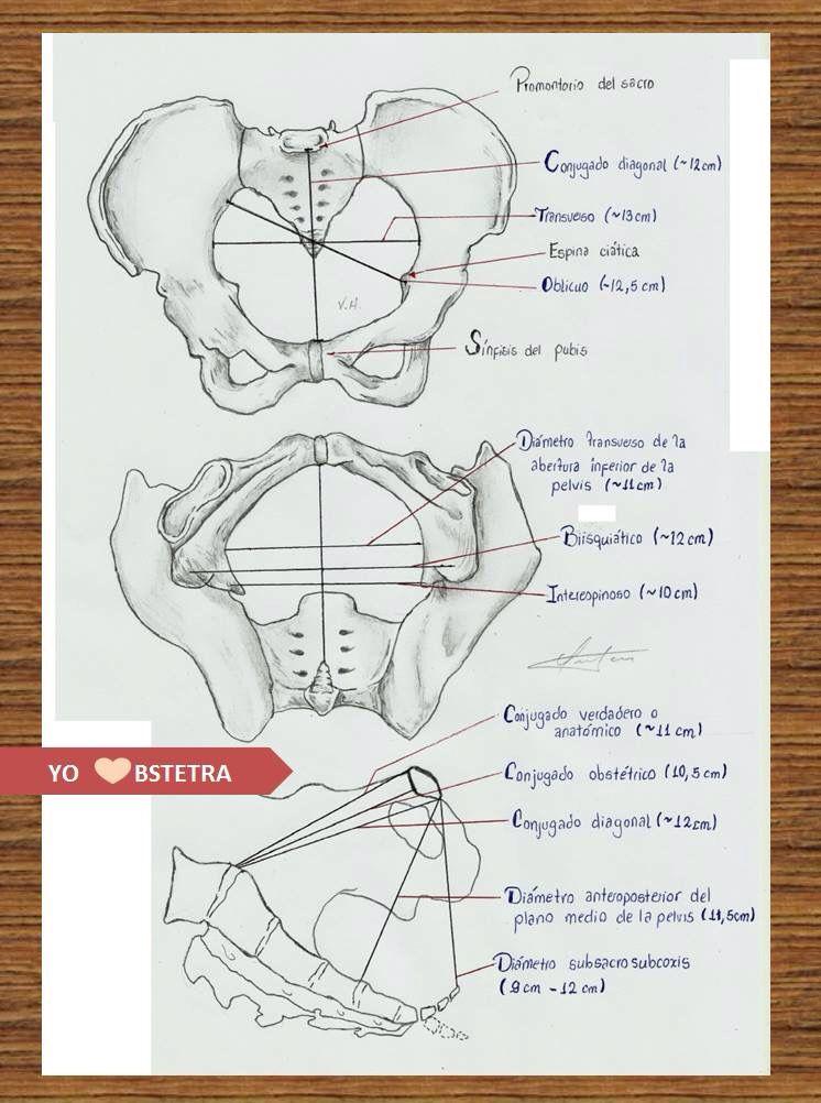 Obstetra planos | Salud | Pinterest | Obstetra, Planos y Anatomía