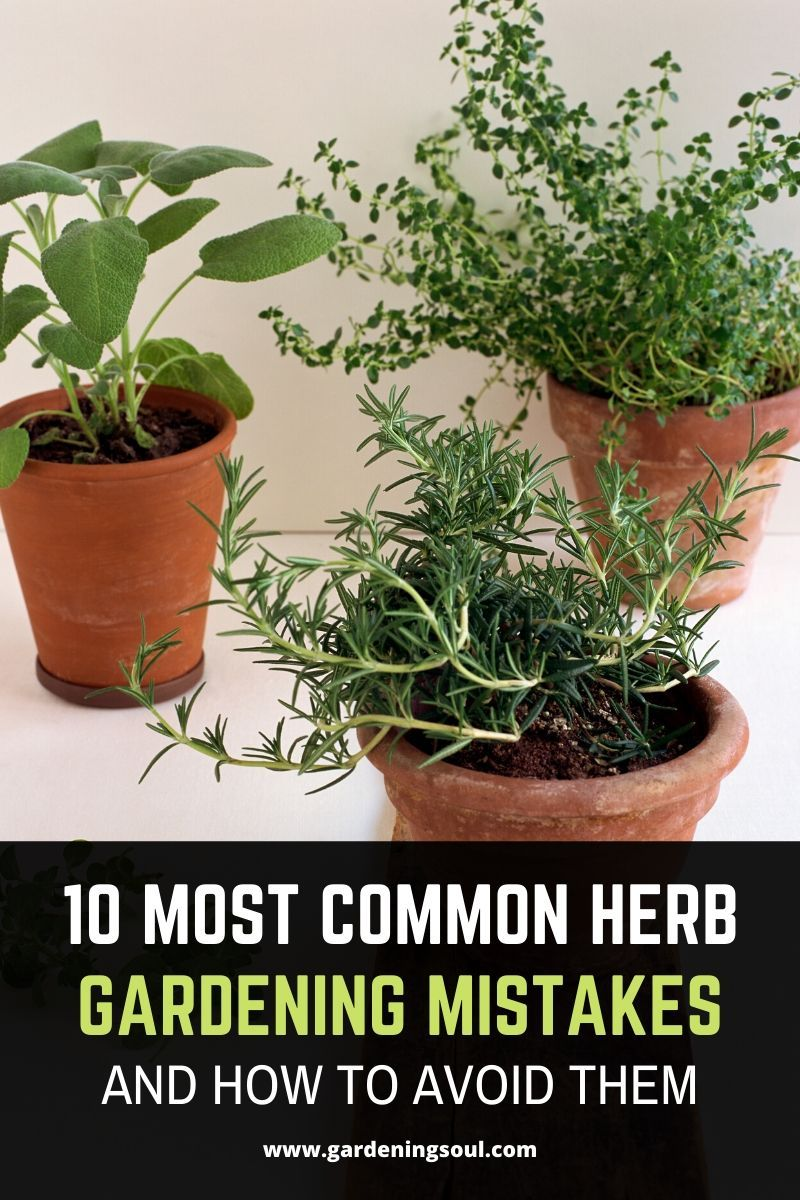 10 Most Common Herb Gardening Mistakes And How To Avoid Them