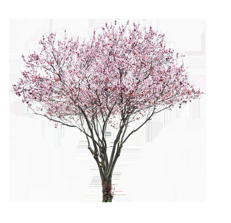 Tree Photoshop, Tree Psd, Tree