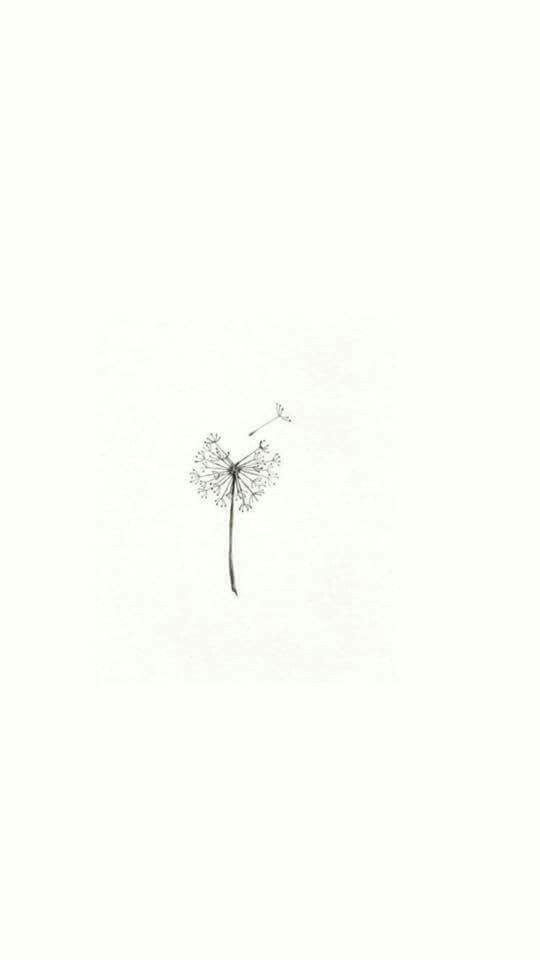 Minimalist Aesthetic Flower Drawing Wallpaper