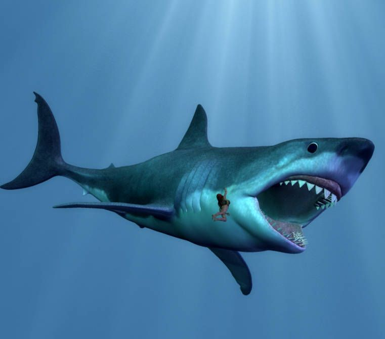 11 Facts About Megalodon The Giant Prehistoric Shark Megalodon Shark Pictures Megalodon Shark