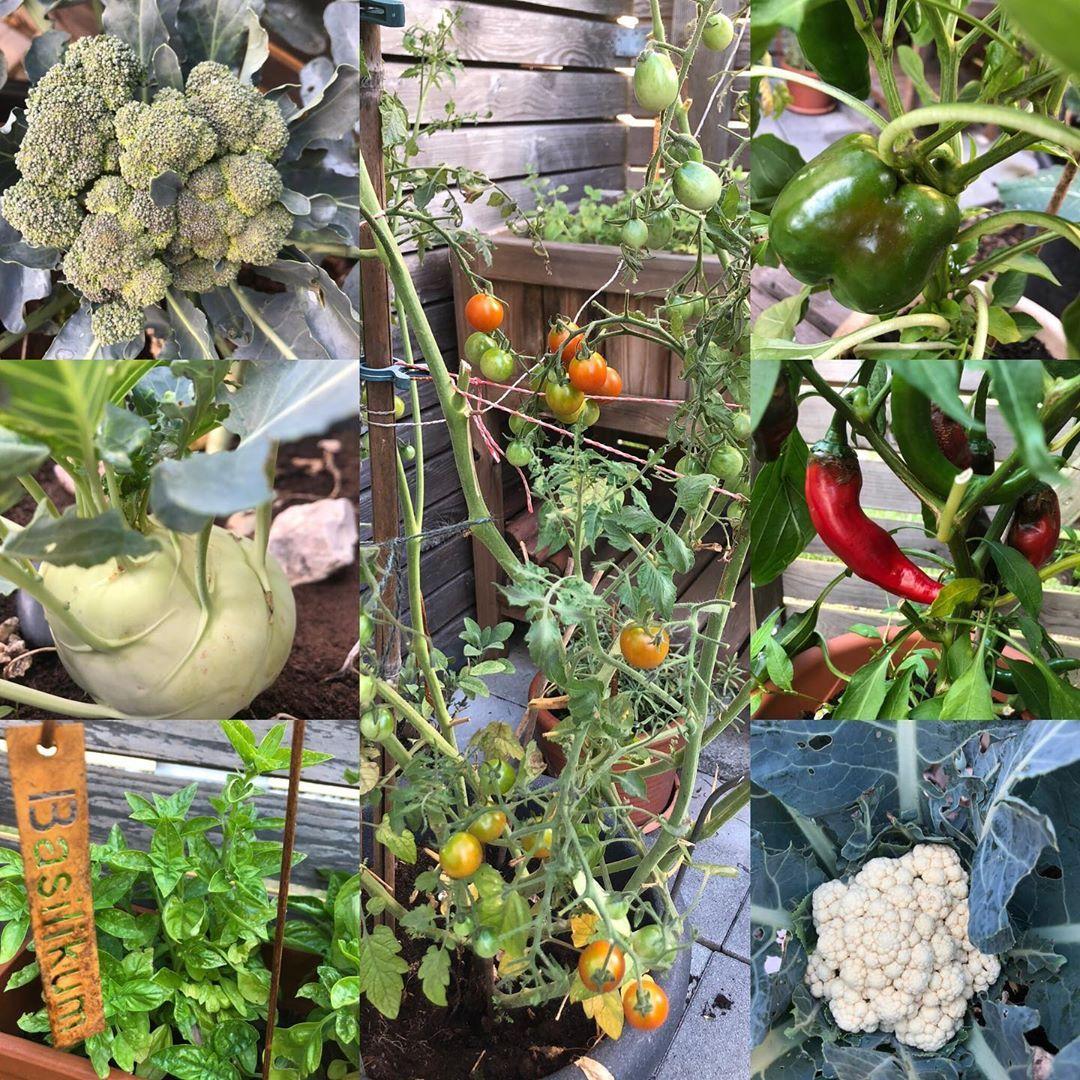 100happydays Tag 9 Wenn Das Biogemuse Im Eigenen Garten Wachst Gemuse Veggie Bio Garten Krauter Gluck Dankbar Bio Gemuse Garten Krauter