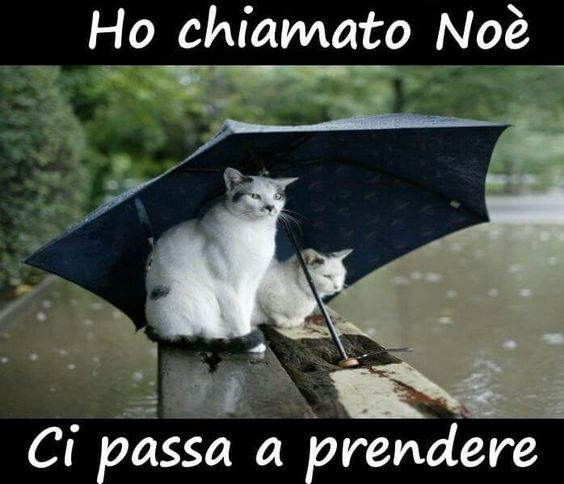 Pioggia Frasi Divertenti Pinterest Funny Cats E Humor