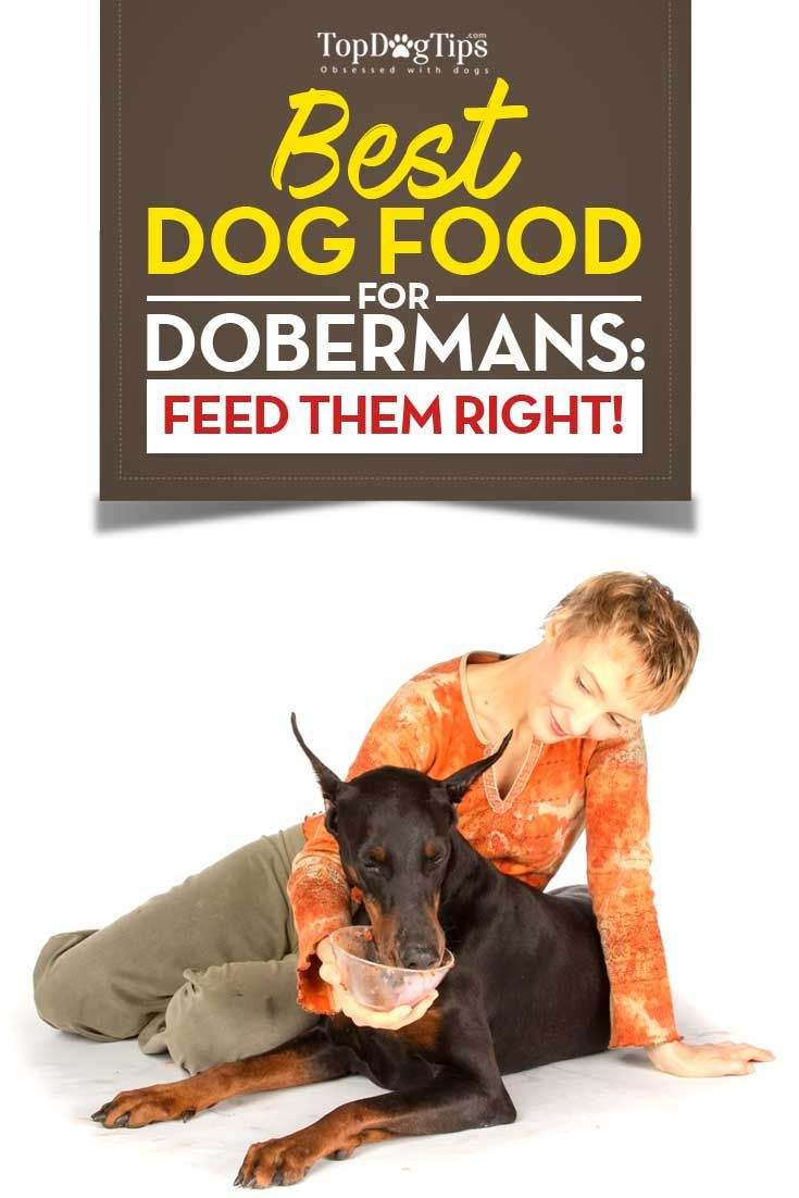 Best Dog Food For Dobermans 2018 What To Feed Doberman Pinschers