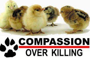 I choose Life because I am compassionate